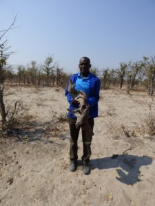 Artist Suze Mutero holding one of his pieces of Mopane against a background of sand and stunted mopane trees and cloudless blue sky in the bush near the Ecoexist camp